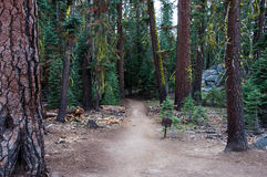Pohono trail in the forest, Yosemite National Park California USA Stock Photography