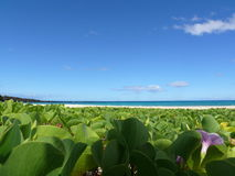 pohuehue острова Гавайских островов пляжа большое Стоковые Изображения RF