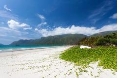 Pohuehue, Seaside Morning Glory Royalty Free Stock Photos