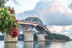 Pohutakawa Tree Blossom And Auckland Harbour Bridge Royalty Free Stock Image