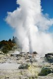 Pohutu Geyser, New Zealand Stock Photos