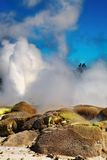Pohutu Geyser, New Zealand Royalty Free Stock Photography