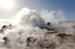 Pohutu Geyser - Rotorua - New Zealand Stock Images