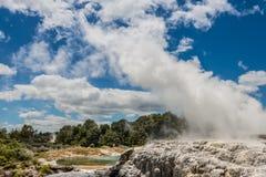 Pohutu Geyser, Rotorua, New Zealand Stock Images