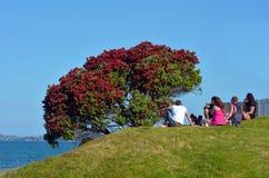Pohutukawa红色花开花在12月 免版税库存图片