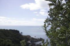 Pohutukawa auf der Insel lizenzfreie stockbilder