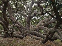 Pohutukawa Baum in Auckland Neuseeland lizenzfreie stockfotografie