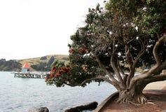 Pohutukawa costero Foto de archivo
