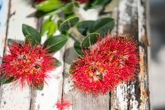 Pohutukawa flower on boatwood tablle closeup. Royalty Free Stock Photos