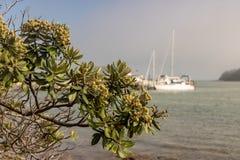 Дерево и берег океана Pohutukawa в Paihia стоковое фото