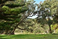 Pohutukawa träd på flodbanken Fotografering för Bildbyråer