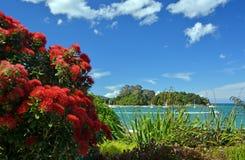 Pohutukawas oavkortad blom på den Kaiteriteri stranden, Nya Zeeland Royaltyfri Bild