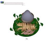Poi eller traditionell Solomonian soppa eller Solomonian havregröt vektor illustrationer