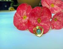 Poi Sian bloeit onze harten royalty-vrije stock afbeelding