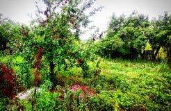 Poiana marului. Copac royalty free stock photography