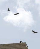 Poiane sul tetto Fotografia Stock Libera da Diritti