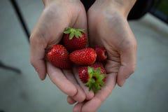 Poignée de fraises organiques propres sur un patio concret images libres de droits
