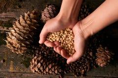 Poignée de noyaux de pignons et de cônes de pin de cèdre photos stock