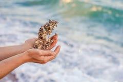 Poignée de pierres de mer Image stock