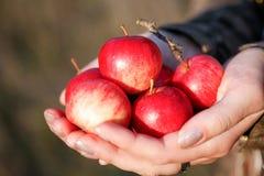 Poignée de pommes Photographie stock libre de droits