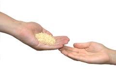 Poignée de riz Photographie stock libre de droits