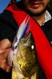 Poignées d'homme de pêcheur à la ligne un brochet vairon propagé une pêche d'attrait de gabarit photos stock
