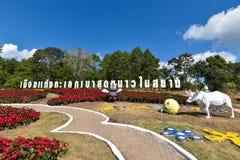 Poinesettia or Christmas star Thailand Royalty Free Stock Photography