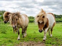 Poinies on Bodmin Moor Stock Photos