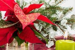 Poinsétia Fotografia de Stock Royalty Free