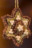 Poinsétia de Brown Fotos de Stock