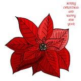 Poinsétia do Natal com três bagas Texto do Feliz Natal e do ano novo feliz ilustração royalty free
