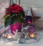 Poinsétia na janela na véspera do Natal & do x28; producti maciço Imagens de Stock Royalty Free
