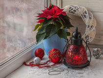 Poinsétia na janela na véspera do producti da massa do Natal Imagem de Stock