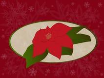 Poinsétia no fundo vermelho do Natal ilustração stock
