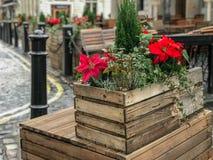 Poinsecji pudełko przy Covent Garden, Londyn, UK fotografia stock