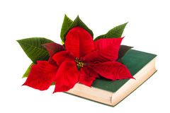Poinsetta and book Stock Photography