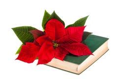 Poinsetta en boek stock fotografie