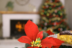 Poinsetta holiday. Shot of a poinsetta holiday Stock Images