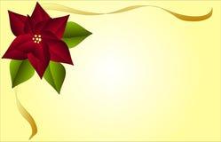 Poinsetta inmóvil Fotografía de archivo libre de regalías