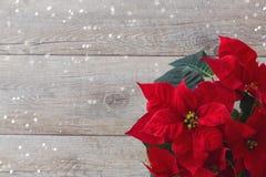 Poinsettia λουλουδιών Χριστουγέννων πέρα από το ξύλινο υπόβαθρο Στοκ εικόνα με δικαίωμα ελεύθερης χρήσης