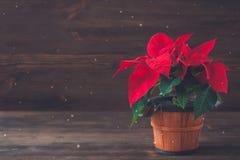 Poinsettia σε ένα καφετί εκλεκτής ποιότητας δοχείο στο ξύλινο υπόβαθρο Στοκ φωτογραφίες με δικαίωμα ελεύθερης χρήσης