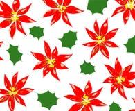 Poinsettia Imagem de Stock Royalty Free