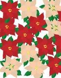 Poinsettia ilustração stock