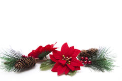 Free Poinsettia Stock Photography - 21104562
