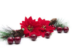 Free Poinsettia Stock Image - 21104811