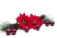 Poinsettia stockbild