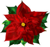 Poinsettia Images stock