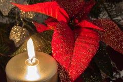 Poinsettia Images libres de droits