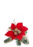 Poinsettia Fotografía de archivo libre de regalías