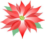 Poinsettia/ai Fotografia de Stock Royalty Free